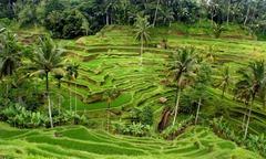 Сингапур и остров Бали - Фотогалерия - снимка 13