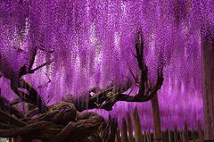 Япония - пътуване във времето - Фотогалерия - снимка 5