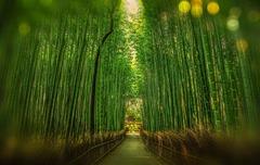 Япония - пътуване във времето - Фотогалерия - снимка 14