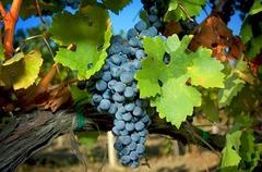 ТОСКАНА - история, вино и кулинарни приключения - Фотогалерия - снимка 15