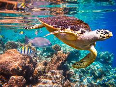 Почивка на остров Занзибар - Фотогалерия - снимка 14