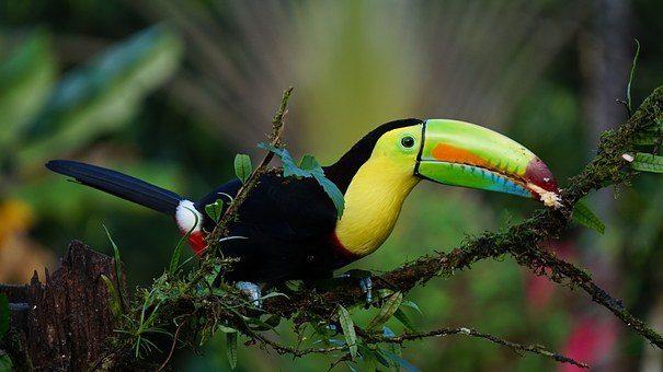 Тропическият Рай - Панама, Коста Рика, Гватемала