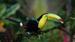Тропическият Рай - Панама, Коста Рика, Гватемала - Фотогалерия - снимка 7