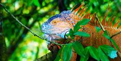 Тропическият Рай - Панама, Коста Рика, Гватемала - Фотогалерия - снимка 8