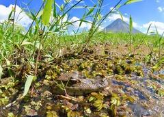 Тропическият Рай - Панама, Коста Рика, Гватемала - Фотогалерия - снимка 12