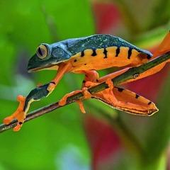 Тропическият Рай - Панама, Коста Рика, Гватемала - Фотогалерия - снимка 15