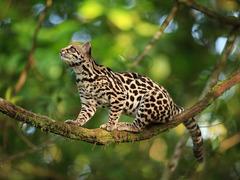 Тропическият Рай - Панама, Коста Рика, Гватемала - Фотогалерия - снимка 22