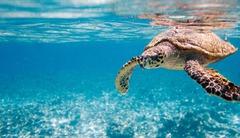 Великден на Сейшелски острови - Фотогалерия - снимка 4
